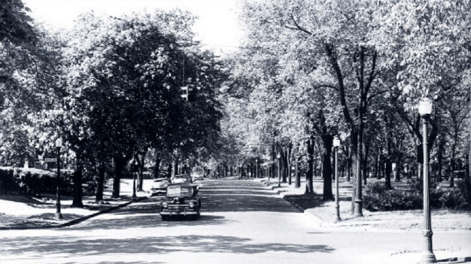 A 1953 photograph of Humboldt Parkway. Buffalo & Erie County Historical Society.