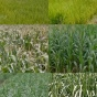 "A sample of the ""sidescan"" images used to train our crop classifier."